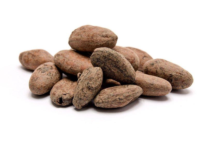 Kakao sjemenka tostirana